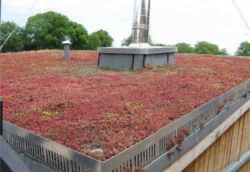 Toiture v g talis e d une habitation en conteneurs toit for Maison toit vegetal